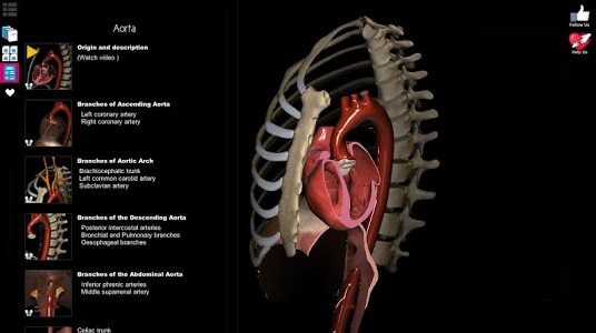 screenshot of Anatomy Learning - 3D Atlas version 2.1
