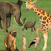 Download Click! Zoo 1.4 APK