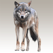 Download Wolf sounds 1.13 APK